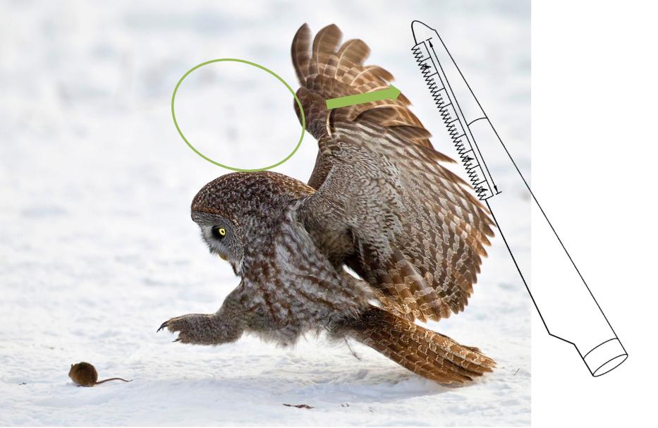 Les serrations sont un dispositif anti-bruit inspiré par bio-mimétisme de l'anatomie des ailes des chouettes.